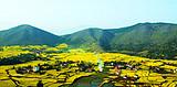 西安到汉中油菜花观赏一日游、汉中一日游