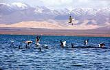 十堰到兰州、青海湖观鸟之旅双飞五日游