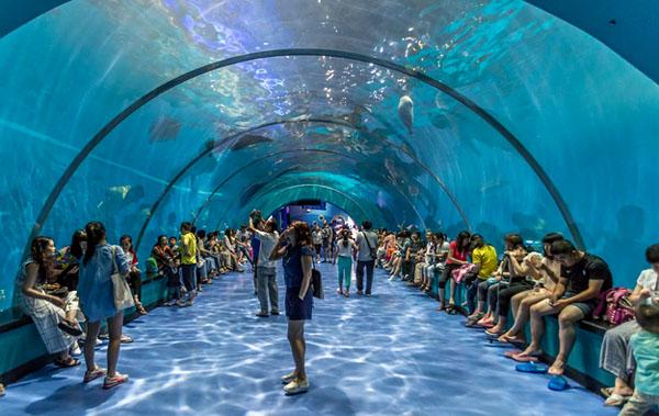 青岛极地海洋世界 黄岛金沙滩休闲二日游 入住商务标准间