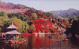 【济南红叶谷一日游】体验花的世界、林的海洋、休闲度假的天堂