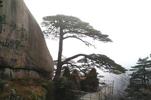 黄山、千岛湖【夜枕秀水】纯玩豪标四日 全程准四酒店