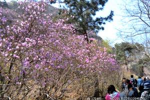 青岛大珠山+野生动物园纯玩二日游 太阳城娱乐国际旅行社出发旅游
