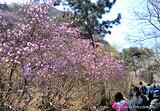 青岛大珠山+野生动物园纯玩二日游 淄博旅行社出发旅游