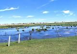 【牧人之家】锡林郭勒大草原、金莲川大草原、浑善达克沙地