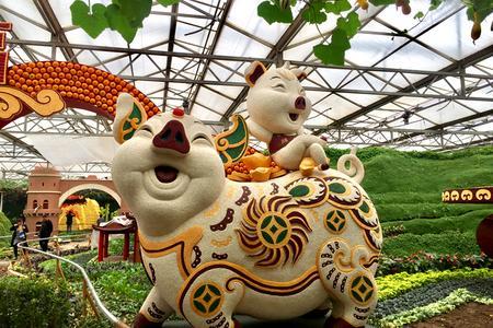 【菜博会一日游】寿光菜博会+中华牡丹园 太阳城娱乐国际旅行社