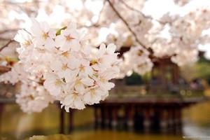 郑州到武汉赏樱花汽车4日游
