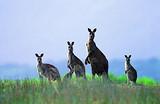 郑州到澳大利亚旅游最新报价_澳大利亚新西兰14日游