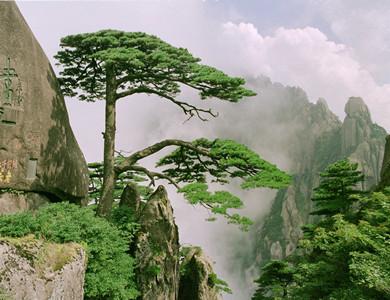 郑州到黄山一地双卧5日游