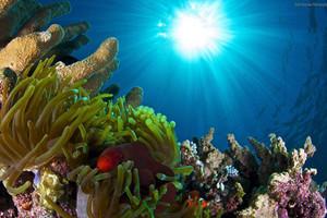 【澳新凯全景游】澳大利亚、新西兰、凯恩斯大堡礁爽乐12日游