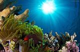 【情定大堡礁】澳新、凯恩斯、墨尔本爱尚礁澳12日之旅