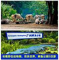 【极限长隆】长隆野生动物园、欢乐世界、鳄鱼公园双卧5日游