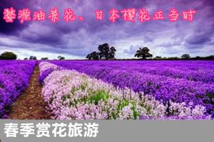 春季赏花旅游团