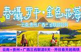 【春摄罗平.金色花海】郑州到云南+贵州+广西三省联游8天