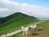 郑州到西安、九寨、黄龙、草原双动双飞4日游