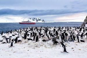 2017年2月2日~南极探险之旅探秘企鹅王国18天(北京往返