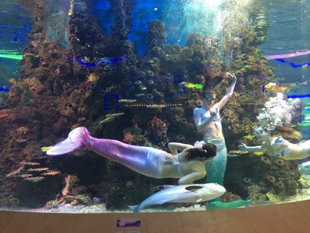 厦门荣誉梵尔纳海底餐厅 自助午餐券
