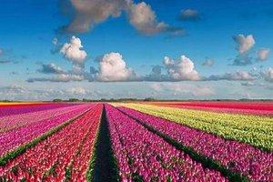 高标  德国荷兰10天