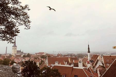 公主邮轮星空公主号——北欧四国+德国+爱沙尼亚+俄罗斯14天