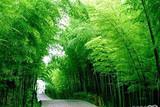 【2020寒假春节亲子】斯里兰卡海洋森林 8日半自助