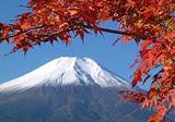 节后3月日本本州品质跟团游价格