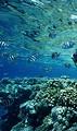 2020年春节亲子马来西亚珍拉丁湾-我们的征途是星辰大海7天