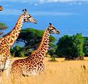 巅峰之旅@肯尼亚+坦桑尼亚+津巴布韦+赞比亚4国16日游