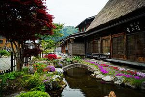 日本本州樱花浪漫6日游