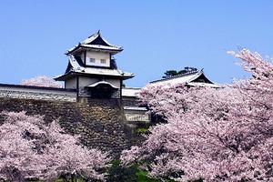 北海道东京暖春赏樱六日游
