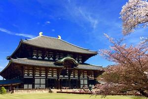 日本本州双古都豪华6日游
