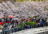 3月日本关东半自助赏樱六日游