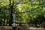 F线:花开半夏-日本东京北海道恋恋花田六日游