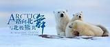 中国人包船南极摄影巡游 阿根廷 秘鲁 玻利维亚 厄瓜多尔30