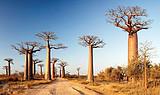 7-10月馬達加斯加8天6晚穆龍生態之旅