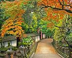 11月A1线:枫叶流丹-日本本州双古都温泉美食赏枫六天游