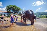 泰國走透透 清邁曼谷芭堤雅四飛八日游