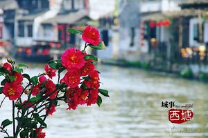 端午节去西塘旅游_最美水乡乌镇、墨色水乡西塘、扬州大巴四日游