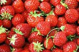 青岛旅行社线路推荐_黄岛野生动物园、红石崖草莓采摘纯玩一日游