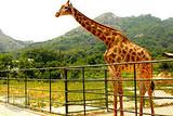 青岛周边 青岛小珠山野生动物园、红石崖草莓采摘踏青一日游