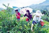 青岛周边一日游_即墨蓝莓采摘+鹤山景区一日游_采摘乐趣