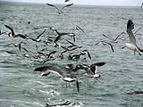 去长岛的旅游团_长岛渔家乐+国家级地质公园2日游_品质纯玩团