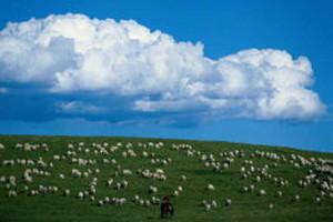 暑假去哪玩_青岛到承德坝上草原、金山岭长城四日游_大草原