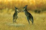 澳大利亚旅游景点排名  青岛到澳大利亚墨尔本 悉尼双飞八日游