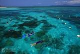 寒假亲子旅游城市排名  青岛到澳大利亚凯恩斯新西兰双飞12日