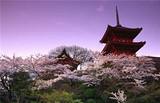 日本签证需要什么资料  青岛到日本镰仓 奈良双飞六日游