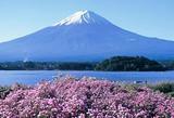 令和风—惠选日本本州温泉赏枫六日(阪东)
