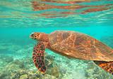 海岛旅游推荐-深圳去马尔代夫快乐岛六天四晚休闲游