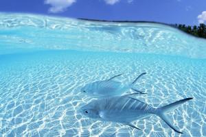 塞班岛 天宁岛 双岛暑假六天游 大自然减压