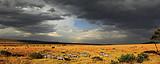 肯尼亚 壮观动物大迁徙 10天团 (安博塞利版)