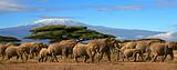 肯尼亚 动物大迁徙 10天团 (桑布鲁版)