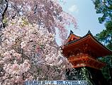 日本本州六天品质之旅 日本旅游 康辉旅行社